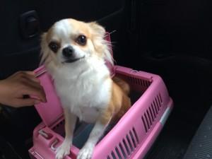 高山~愛犬ミロちゃんもお出かけ