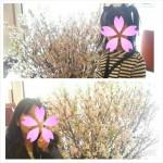 PhotoHenshu_20170403003915.jpg