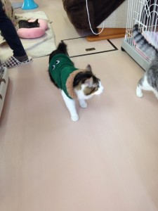 ボランティア先の猫ちゃんたち