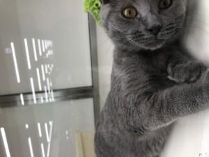 ねずみ色の猫ちゃん♡
