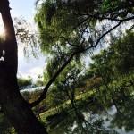平和公園でピクニック