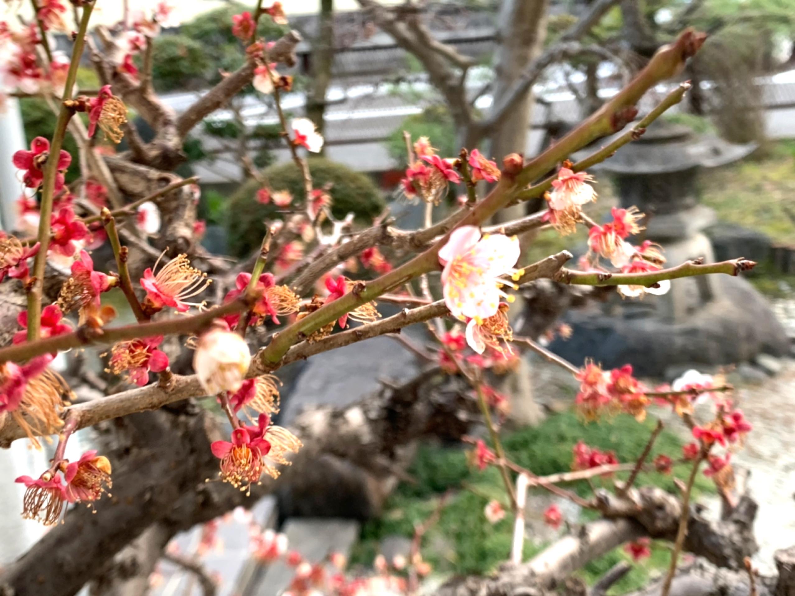 春を見て甦る記憶