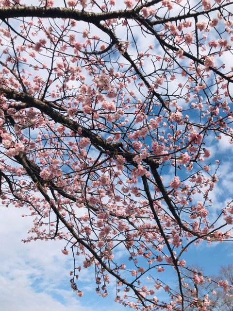 ☆桜の美しい季節☆