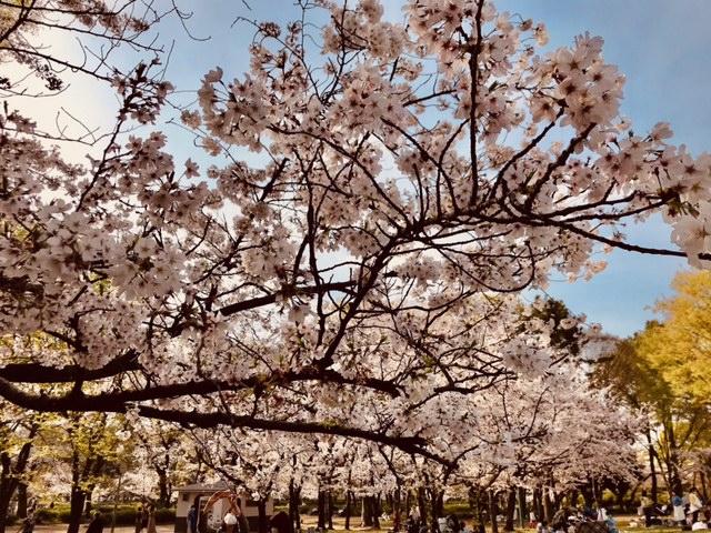 ☆桜満開中!☆