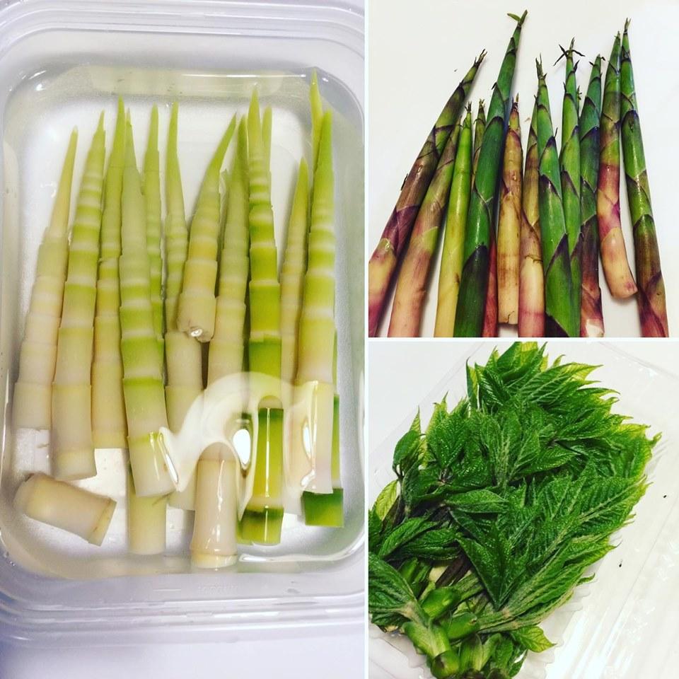 今春最後の山菜遊び。ネマガリタケ(姫竹)はちょっと手のかかる山のお嬢様