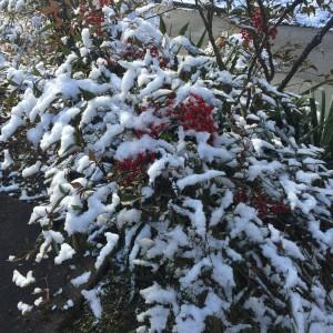 ぽかぽか陽気の正月三が日